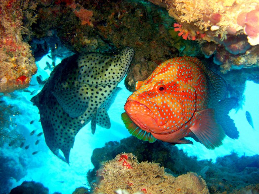 Nueva Zelanda creará una reserva marina del tamaño de Francia