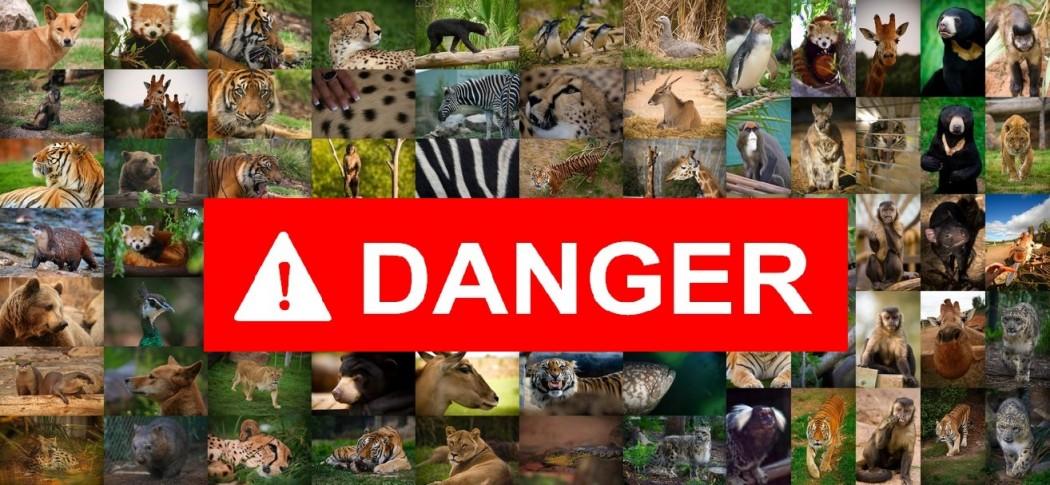 ¿Cuál es el animal más peligroso del mundo?