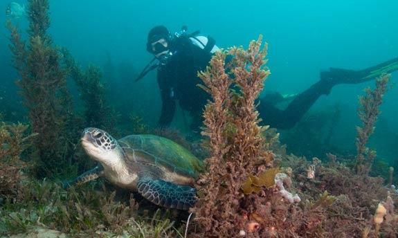 Nueva Zelanda creará una reserva marina del tamaño de Francia 2